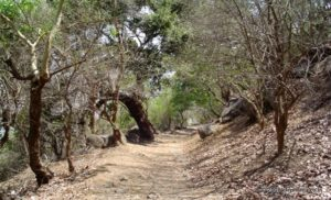 Trail to Cannon Hill in Elephanta Island